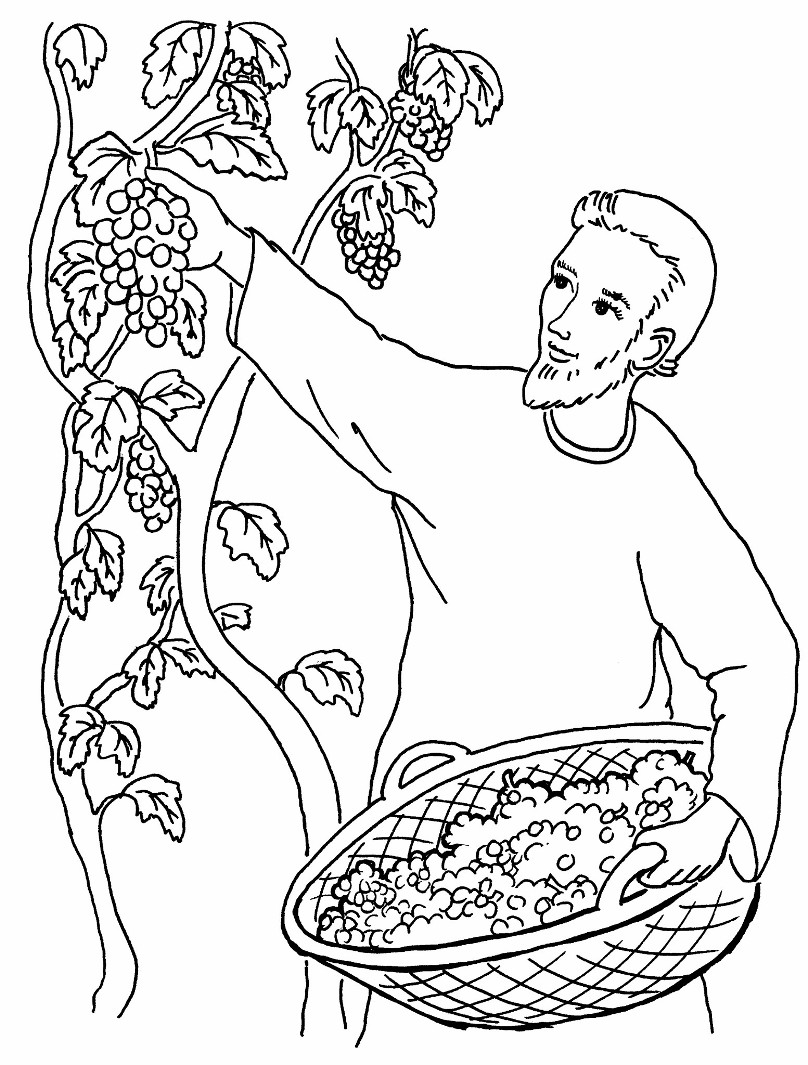 parables of jesus coloring pages - vineyard on pinterest