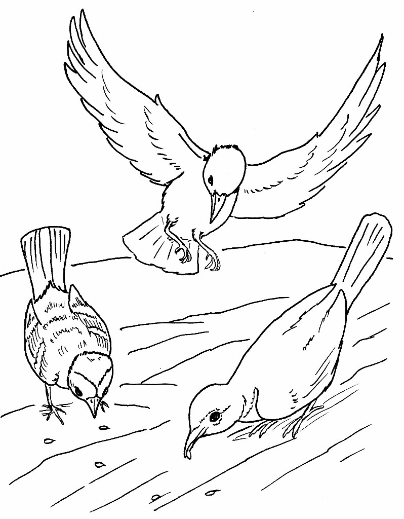The Parable Of Sower Coloring Page Coloring Pages